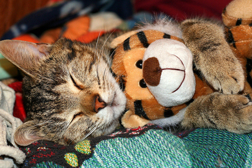 Riverside Veterinary Animal Pictures - Cat with stuffed animal friend