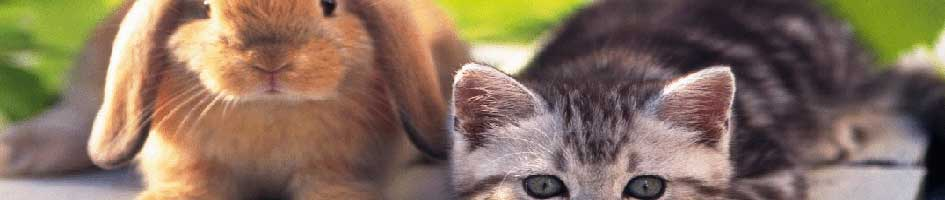 Veterinarian Near Me – Riverside Veterinary Clinic