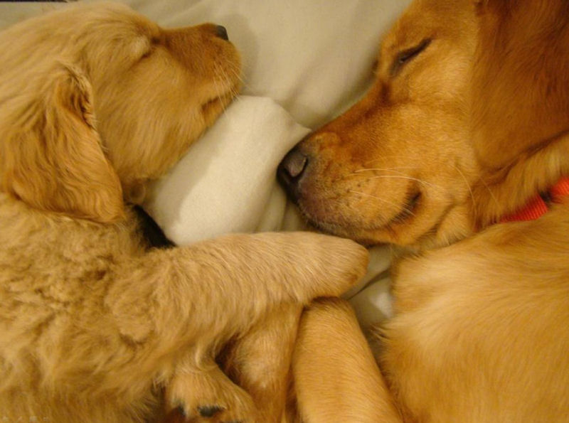affordable pet care - two adorable puppies