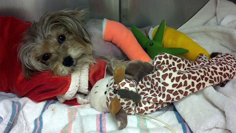 emergency veterinary clinic treated dog for broken leg