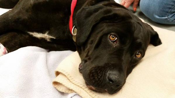 injured dog brought to emergency veterinary clinic