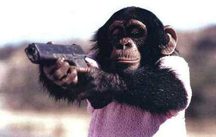Riverside Veterinary Clinic-monkey with a gun