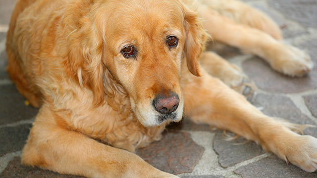 old dogs time for euthansia