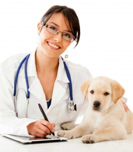 veterinarian-with-puppy